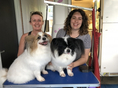 4-day Intensive Dog Grooming Course Edge Hill Cairns 2018