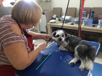 Learn to Scissor Groom a Dog at Smooch a Pooch