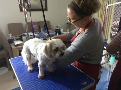 Sharon learning Dog Grooming