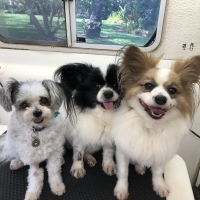 Ziggy, Moet and Manut