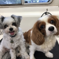 Ziggy and Charlie
