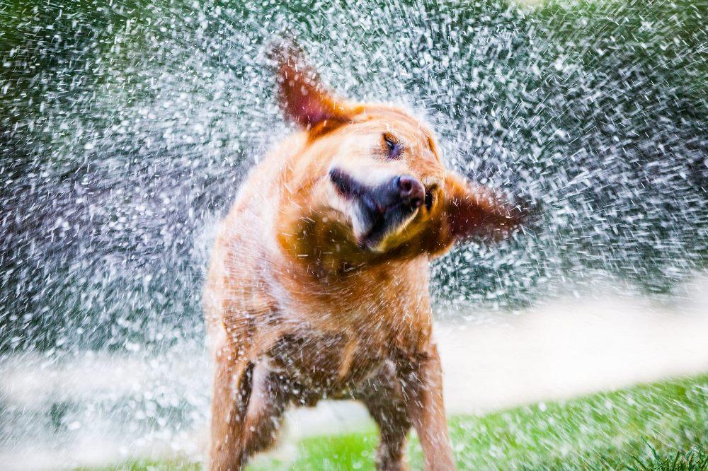 Rhi's Mobile Dog Wash