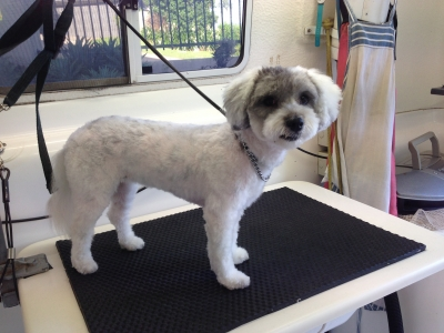 Learn to Groom Dogs with Smooch a Pooch Cairns