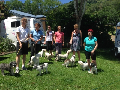 Dog Grooming Course Cairns January 2015