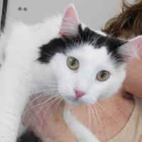 Cat Grooming - Tia