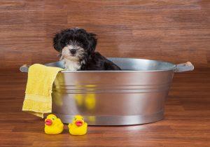 Safe Dog Grooming