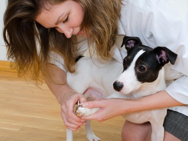 Safe Dog Nail Trimming