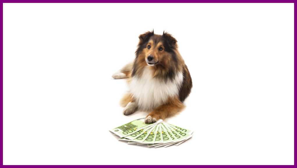 collie and money