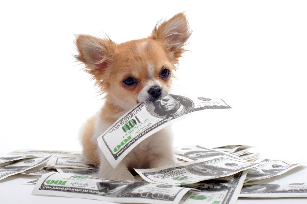 dog and money