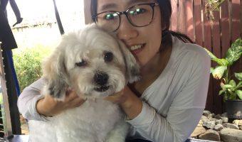 Manoora Small Dog Groomer